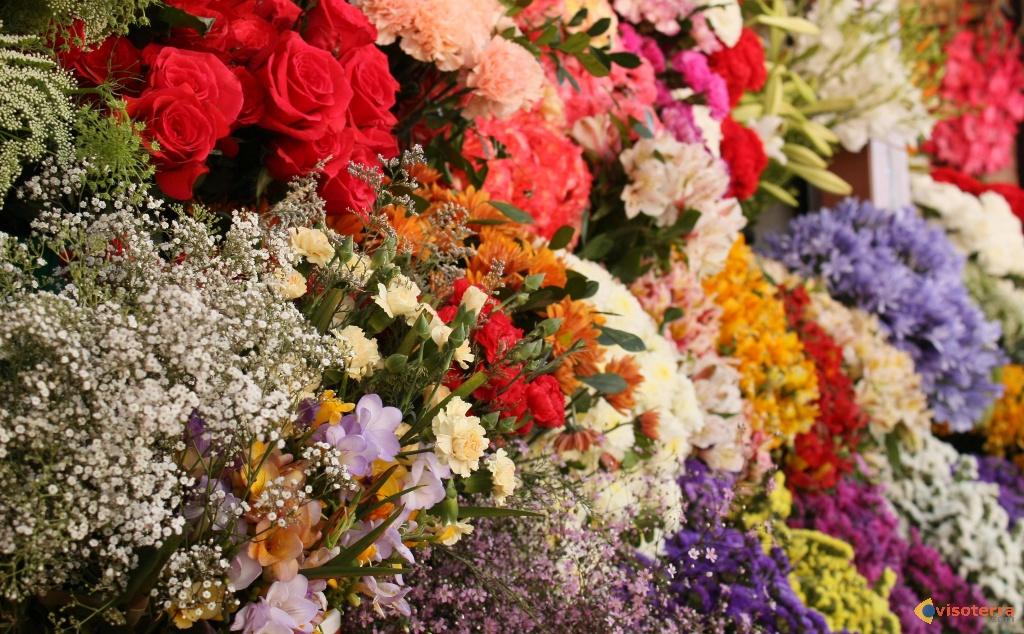 25 me march aux fleurs cercle horticole de lambusart for Place du jardin aux fleurs
